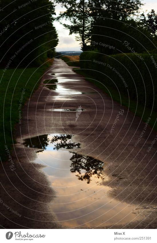 Pfützenfoto Natur Baum Einsamkeit Straße dunkel Wege & Pfade Regen nass schlechtes Wetter