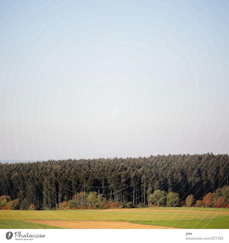 CHAMANSÜLZ   waldrand Umwelt Natur Landschaft Pflanze Tier Baum Sträucher Grünpflanze Nutzpflanze Wildpflanze Feld Wald natürlich blau gold grün Farbfoto