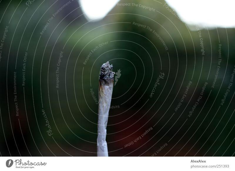 Ewige Versuchung weiß grün Tod Garten Wetter Rauchen Rauschmittel Frustration Laster Joint Glut Zigarettenasche Tabak Drogensucht Sucht Genusssucht