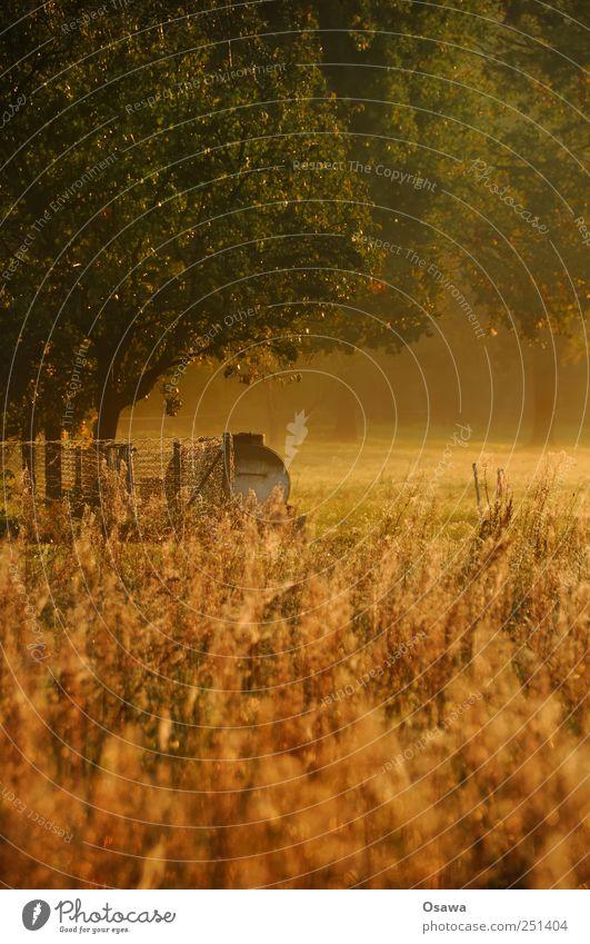 Kossenblatt 3 Feld Wiese Weide Sonnenaufgang Morgendämmerung Gras Baum Blatt Zaun Hochformat Landschaft rural Landwirtschaft Menschenleer Textfreiraum