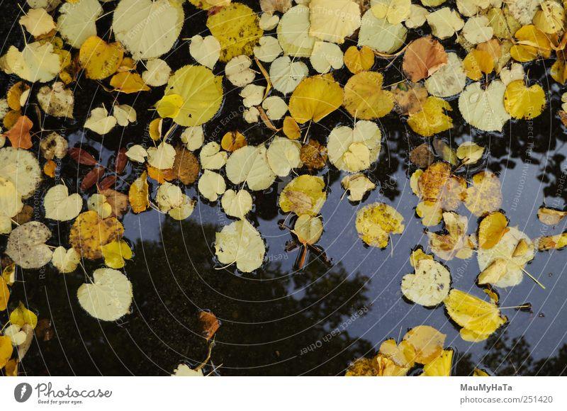 Herbstpalette in einer Pfütze Natur Pflanze Urelemente Wasser Klima schlechtes Wetter Regen Blatt Park chaotisch Ende Energie Kunst Rätsel Farbfoto