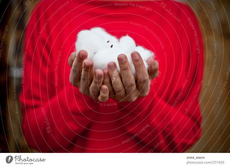 Schneeweiß Rosenrot Mensch Hand schön Winter ruhig Erholung Leben Zufriedenheit Finger ästhetisch natürlich Perspektive Sicherheit Schutz
