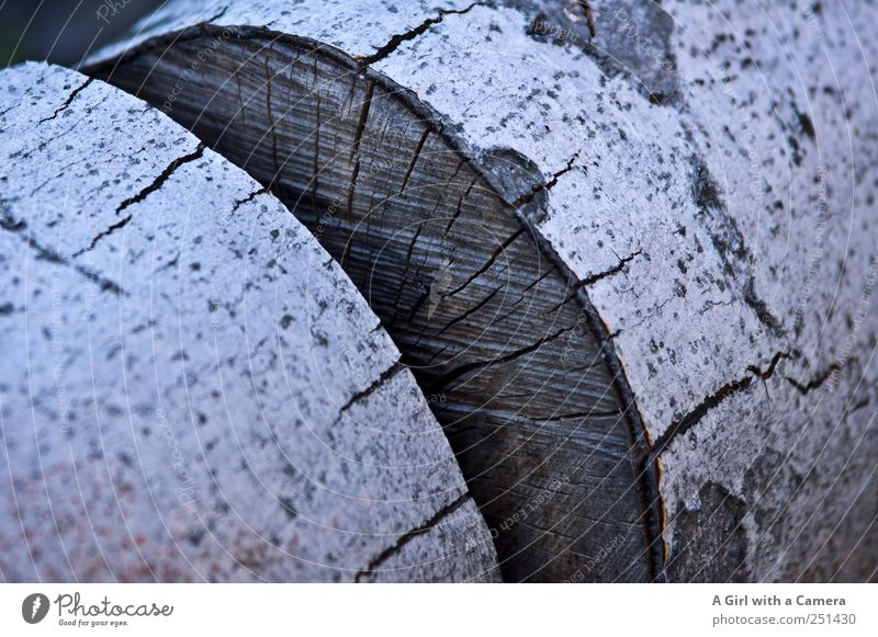 Chamansülz 2011 - logs Natur Pflanze liegen gigantisch groß nah natürlich trocken Baumrinde Baum fällen Baumstamm rund Vorrat Brennholz Gedeckte Farben