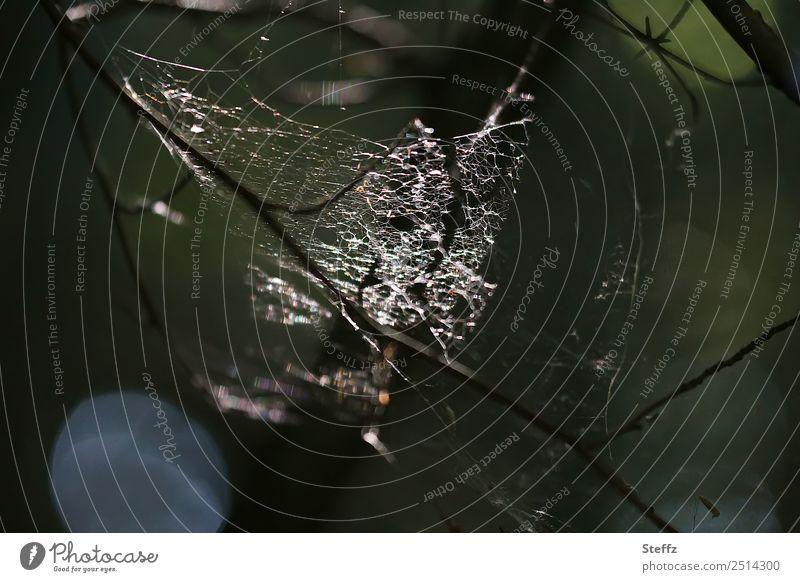 Spinnennetz in geheimnisvollem dunklem Wald Halloween Spinngewebe düster finster Waldgeheimnis Netz glänzend leuchtet leuchten graugrün beunruhigend dunkelgrün