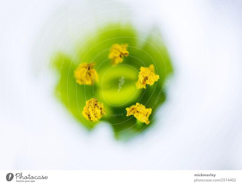 Bienennahrung Alternativmedizin Wellness Leben Sinnesorgane Duft Sommer Umwelt Natur Pflanze Frühling Pollen Garten Park Wiese Wald atmen beobachten genießen
