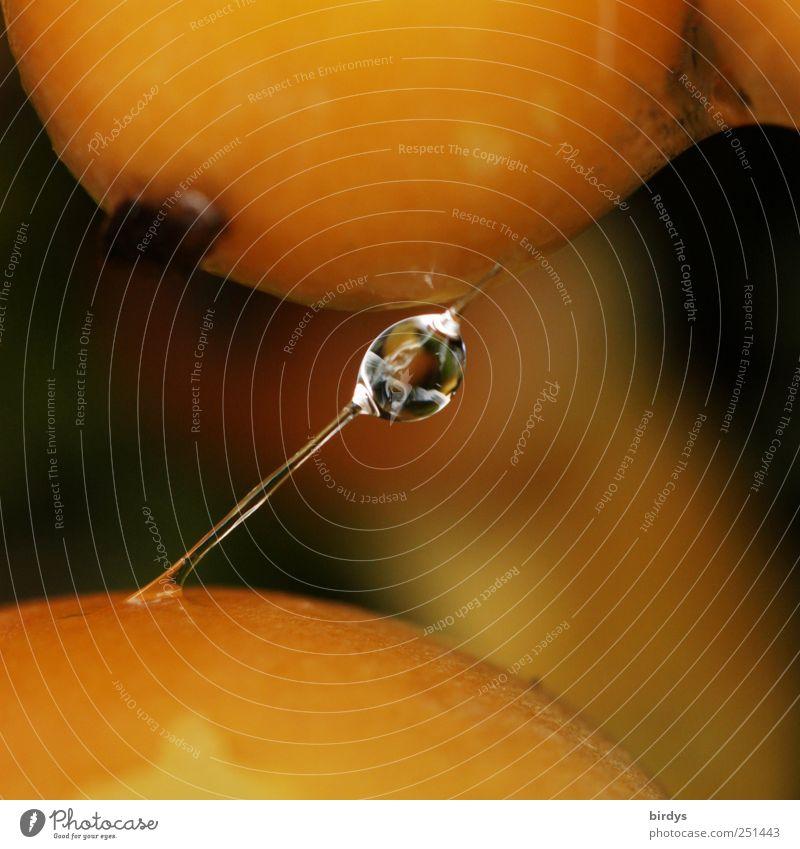 Glibber Pilz glänzend nass natürlich schleimig gelb Natur Verbindung Sekret Wassertropfen Schleim Verbundenheit durchsichtig Reflexion & Spiegelung feucht