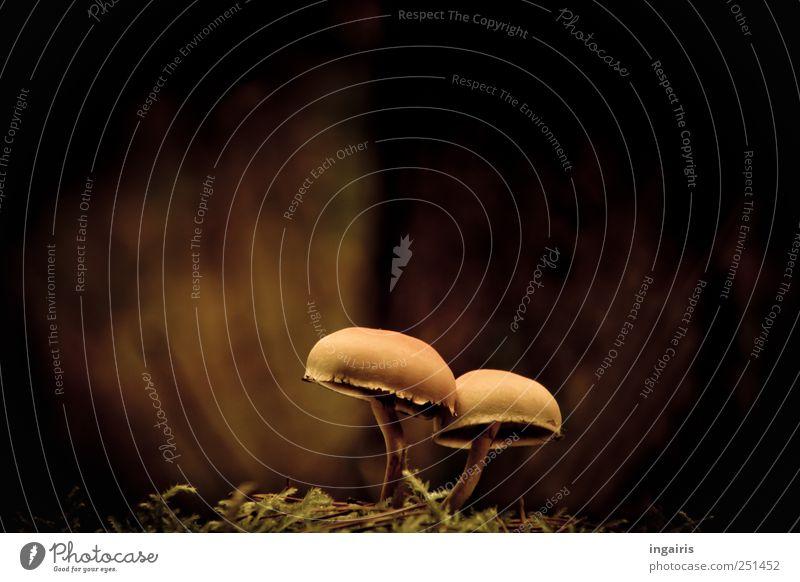 Giftige Zweisamkeit Natur schön Pflanze Zusammensein Erde natürlich Romantik berühren entdecken Moos unschuldig Pilzhut Verschwiegenheit