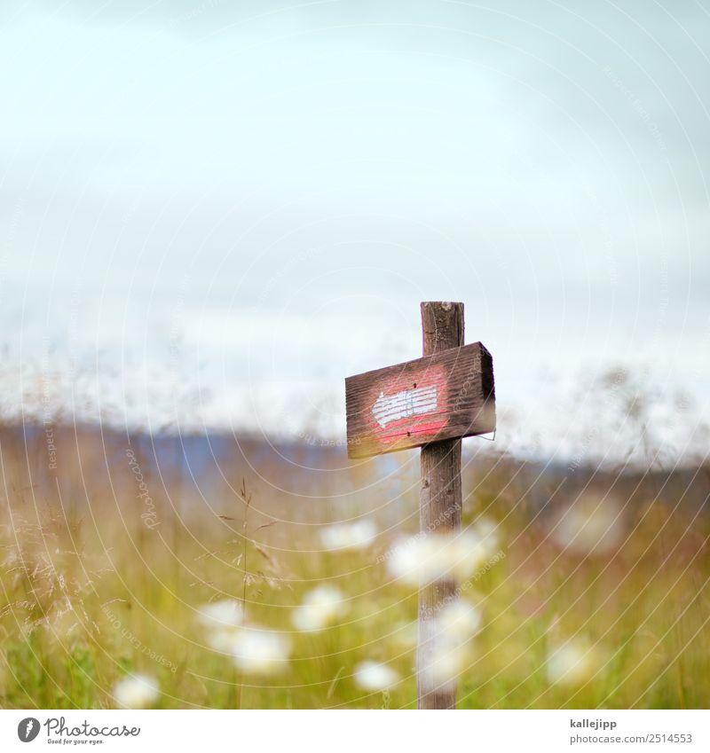 sie haben das ziel erreicht Natur Pflanze Landschaft Umwelt Blüte Wege & Pfade Wiese Holz wandern Schilder & Markierungen Erfolg planen Hügel