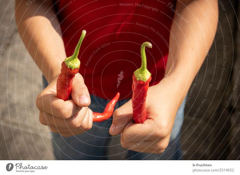 Kind hält zwei Peperoni Lebensmittel Gemüse Bioprodukte Gesunde Ernährung Essen Hand festhalten frisch Gesundheit rot Chili 2 paarweise haltend