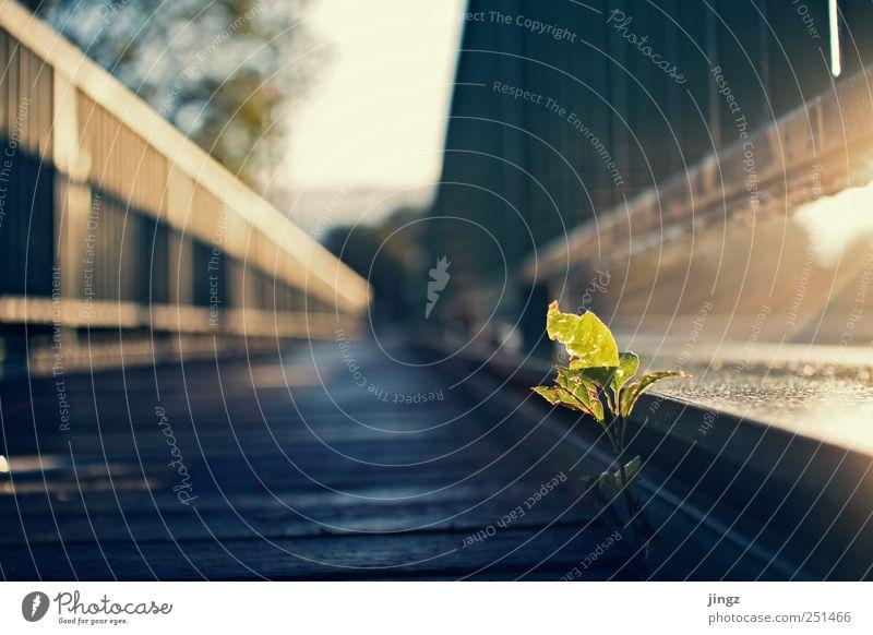 Good morning sunshine grün blau Pflanze Blatt Einsamkeit schwarz gelb Erholung Leben Glück Wege & Pfade frisch Fröhlichkeit Wachstum niedlich Warmherzigkeit