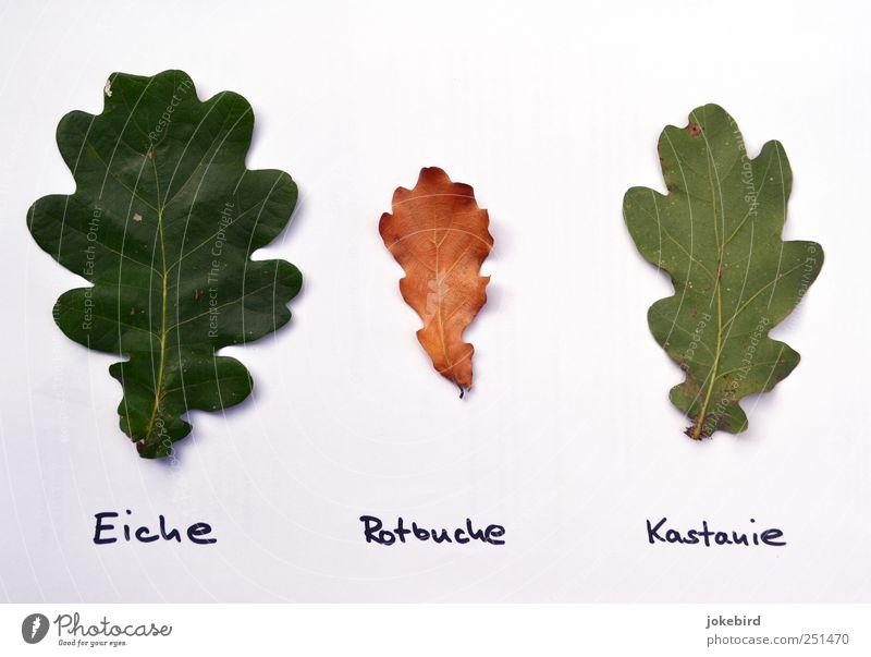 herbarium for dummies grün weiß Pflanze Blatt lustig Denken Schule Kindheit lernen Kindheitserinnerung einzigartig Kreativität Bildung Wissenschaften skurril dumm