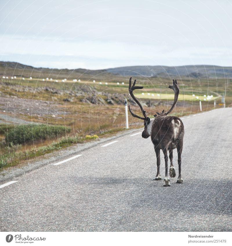 Rudi Ratlos Natur Ferien & Urlaub & Reisen Tier Ferne Straße Freiheit Landschaft Wege & Pfade laufen wandern Verkehr Wildtier Sicherheit außergewöhnlich skurril Autofahren