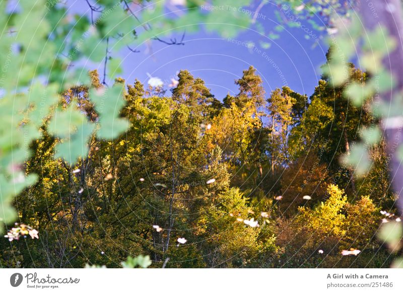 Chamansülz - reflecting Umwelt Natur Pflanze Himmel Wolkenloser Himmel Herbst Wetter Schönes Wetter Baum Blatt Wald Flussufer leuchten ruhig mehrfarbig