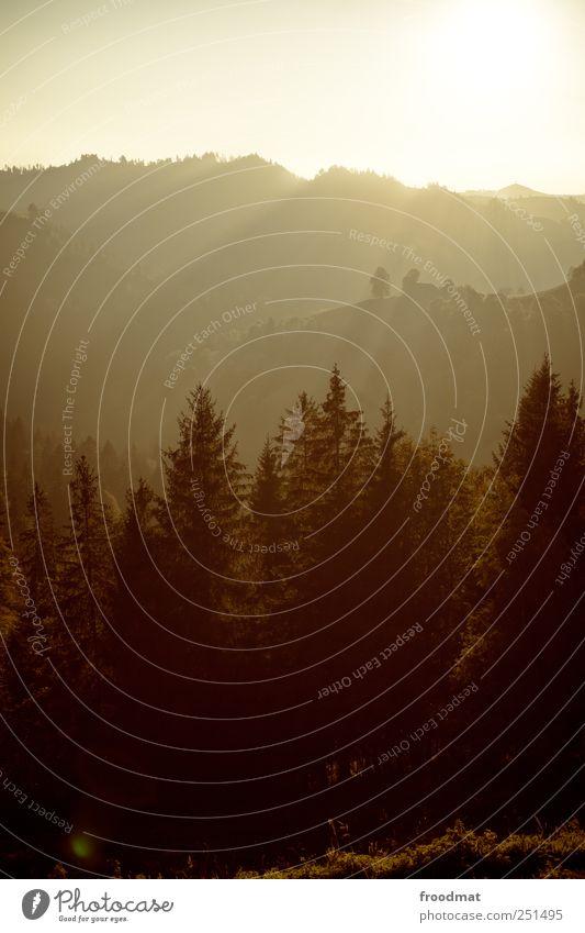 layered Umwelt Natur Landschaft Wolkenloser Himmel Sonnenaufgang Sonnenuntergang Sonnenlicht Sommer Herbst Schönes Wetter Nebel Wald Hügel Alpen