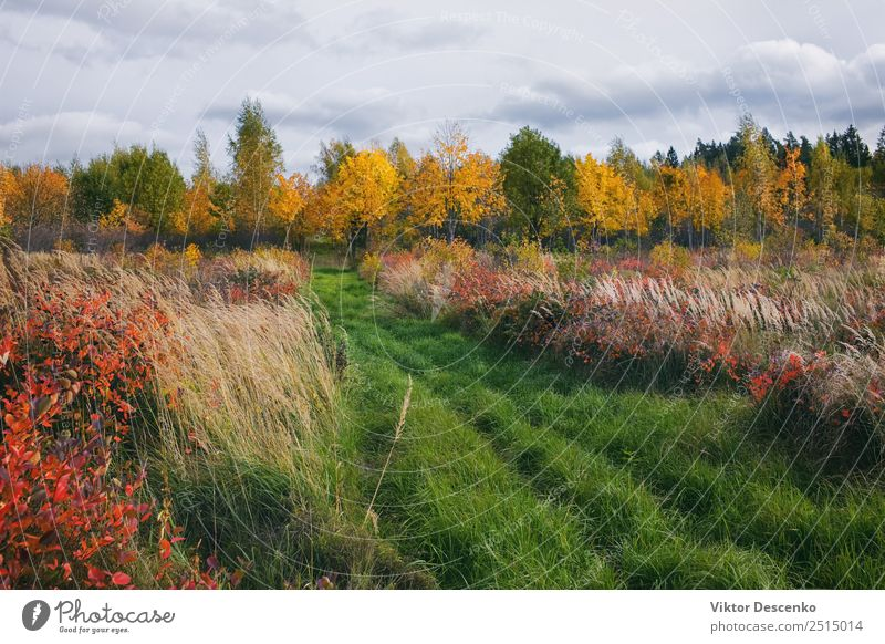 Herbstwiese mit Gras in Waldnähe schön Ferien & Urlaub & Reisen Sommer Sonne Winter Umwelt Natur Landschaft Pflanze Himmel Wolken Horizont Baum Blatt Wiese