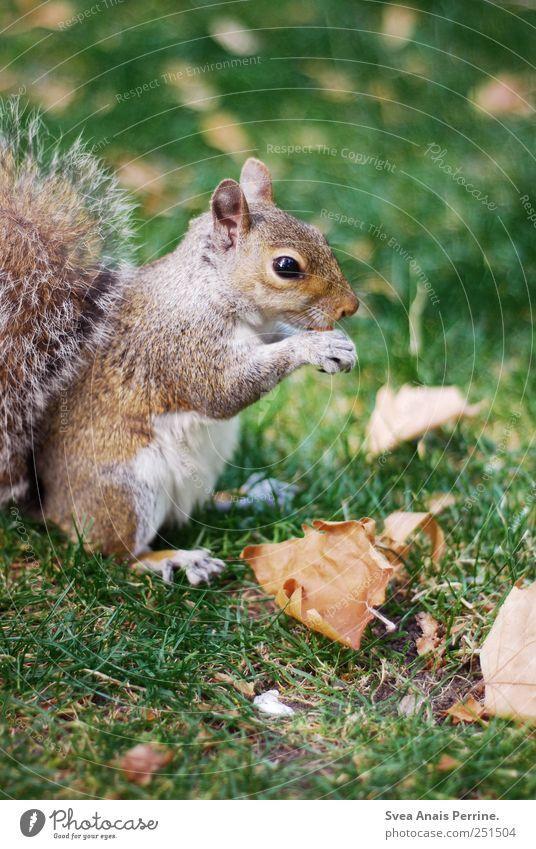 mjam. Blatt Tier Wiese Park Wildtier niedlich Eichhörnchen