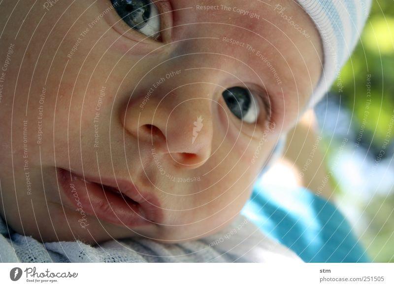 neugier ohne ende Mensch Kind blau schön Gesicht Auge Junge Kopf Kindheit Zufriedenheit Baby Haut Mund maskulin Nase niedlich