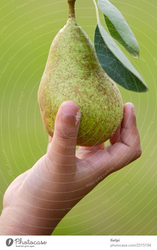Eine Hand fängt eine köstliche grüne Birne. Frucht Ernährung Diät Sommer Garten Finger Natur Landschaft Herbst Baum Blatt frisch natürlich saftig
