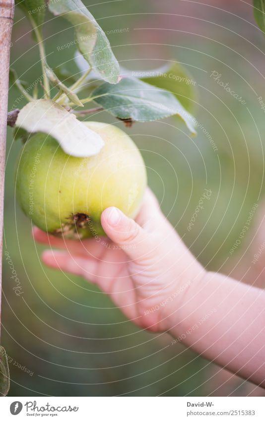 Unterwegs im Garten V Lebensmittel Frucht Apfel Ernährung Kindererziehung Mensch Baby Kleinkind Kindheit Hand Finger 1 Umwelt Natur Sommer Schönes Wetter