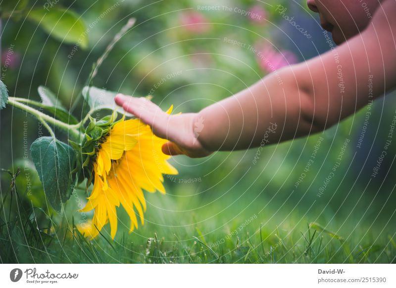 Im Garte gibt es viel zu entdecken Kind Blume Garten Freude Kindheit Sommer Spielen Natur Farbfoto anfassen berühren niedlich Sonnenblume gelb grün Nahaufnahme