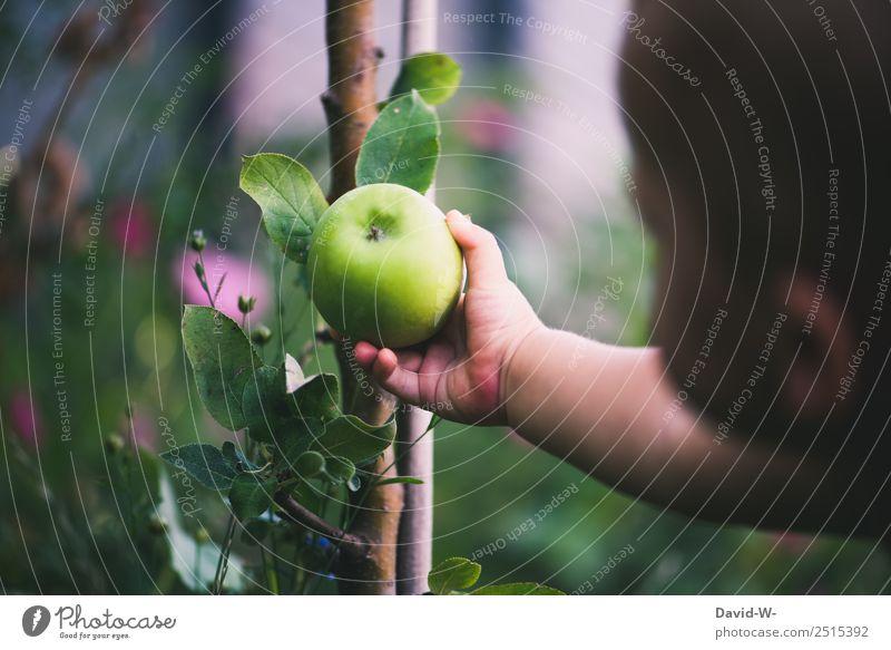 Unterwegs im Garten II Mensch Kind Baby Kleinkind Mädchen Junge Kindheit Leben Kopf Hand Finger 1 0-12 Monate Umwelt Natur Landschaft Sommer Pflanze Baum