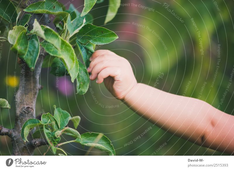 Unterwegs im Garten I Lifestyle Leben harmonisch Wohlgefühl Zufriedenheit Sinnesorgane Spielen Ferien & Urlaub & Reisen Mensch Kind Baby Kleinkind Mädchen Junge