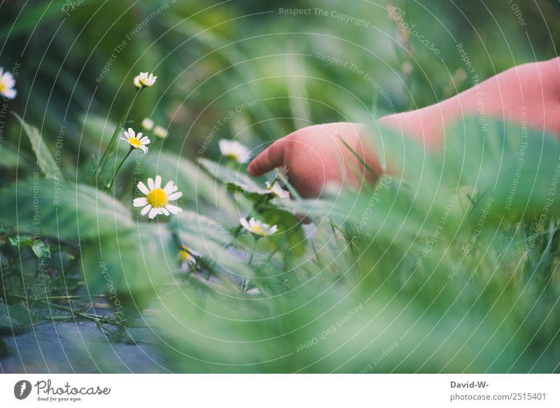 Unterwegs im Garten IV Leben Sinnesorgane Wohnung Mensch Kind Baby Kleinkind Kindheit Hand Finger 1 0-12 Monate Umwelt Natur Klima Schönes Wetter Pflanze Blume