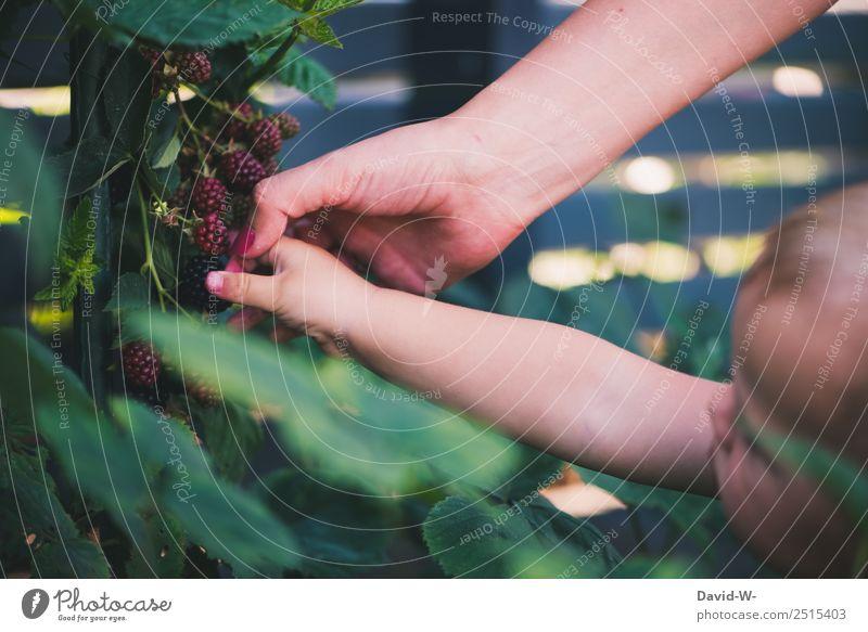 Unterwegs im Garten VII Frucht Ernährung Bioprodukte Kindererziehung Mensch Baby Kleinkind Mädchen Eltern Erwachsene Mutter Kindheit Leben Hand 1 0-12 Monate