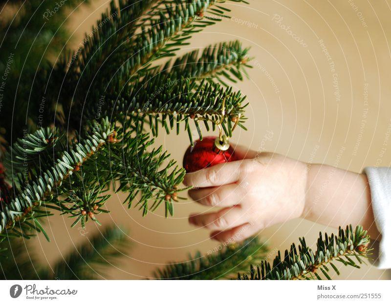 Vorfreude Kind Weihnachten & Advent rot Kindheit glänzend Finger Dekoration & Verzierung Ast Weihnachtsbaum Kleinkind Zweig Christbaumkugel verschönern