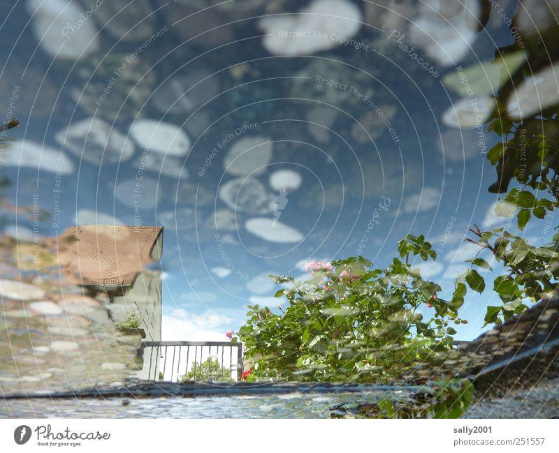 Traumland in Waschbeton Wasser Haus Wege & Pfade träumen Stimmung nass Beton ästhetisch Sträucher Rose außergewöhnlich fantastisch Zaun bizarr Pflasterweg