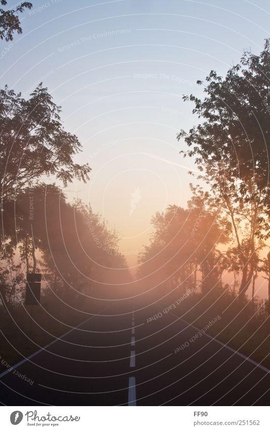 Oktobermorgen Natur Baum Pflanze ruhig Straße Herbst Umwelt Wetter Nebel frisch Fröhlichkeit Warmherzigkeit Freundlichkeit Schönes Wetter Vorsicht