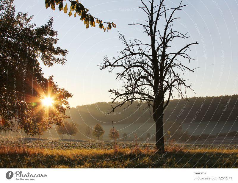 Guten Morgen Sonnenschein Natur Landschaft Pflanze Sonnenaufgang Sonnenuntergang Sonnenlicht Herbst Klima Baum Sträucher frisch Jahreszeiten Himmel Ast Farbfoto
