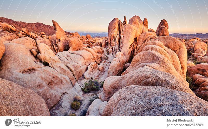 Einzigartige Felsformationen im Joshua Tree Nationalpark bei Sonnenuntergang. Ferien & Urlaub & Reisen Tourismus Ausflug Abenteuer Expedition Sommer wandern