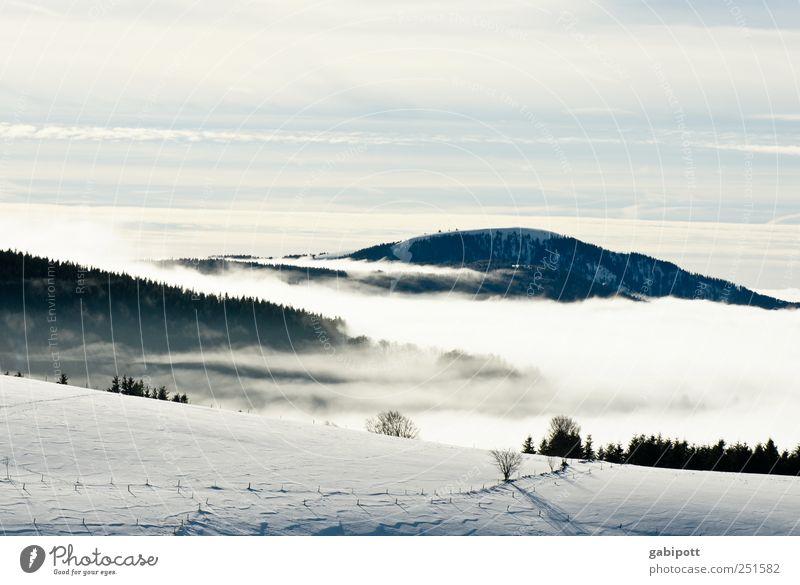 Winter im Ländle Tourismus Ausflug Ferne Schnee Berge u. Gebirge wandern Umwelt Natur Himmel Wolken Wetter Schönes Wetter Nebel Eis Frost kalt blau weiß