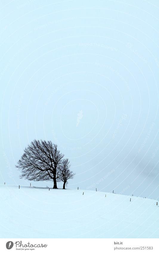 [Usertreff Jahresende 2010] Umwelt Natur Himmel Winter Klima Wetter Wind Sturm Nebel Eis Frost Schnee Pflanze kalt blau schwarz Stimmung ruhig Baum Neigung