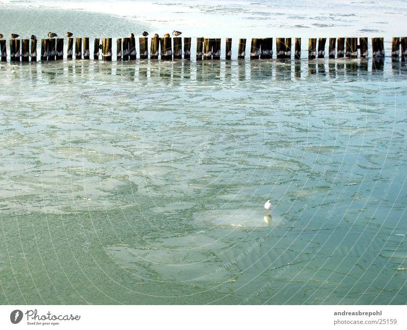 kuck mal...Eis! Möwe Eisscholle Vogel Buhne kalt Winter gefroren Wasser Ostsee Küste Flachwasser Grundbesitz Frost