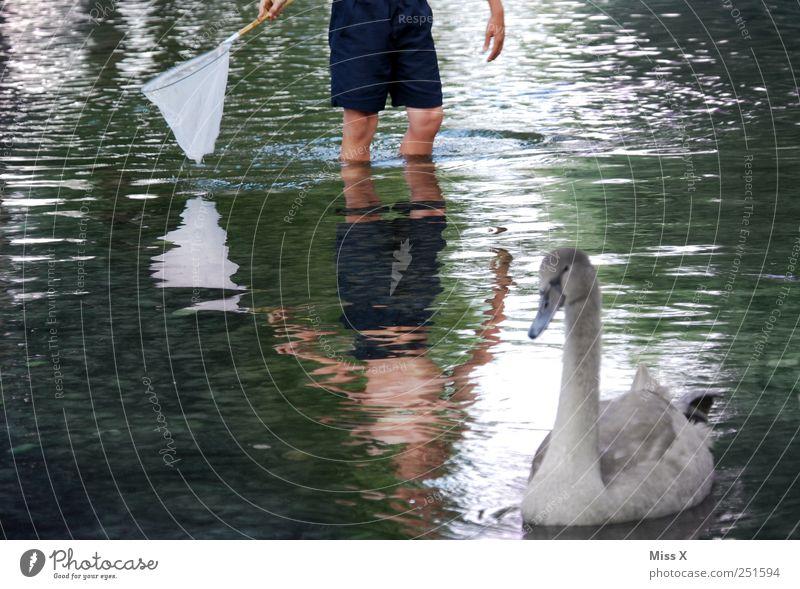 Fang mich doch... Mensch Kind Junge Beine 1 8-13 Jahre Kindheit Natur Tier Wasser Sommer Küste Seeufer Teich Bach Fluss Wildtier Schwan Tierjunges fangen nass