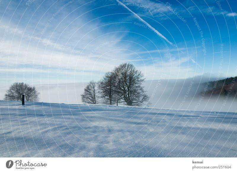Hochnebel Umwelt Natur Landschaft Pflanze Himmel Wolken Winter Wetter Schönes Wetter Nebel Eis Frost Schnee Baum Buche kalt blau weiß Einsamkeit Winterstimmung