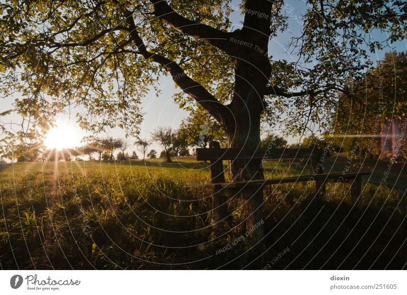 [CHAMANSÜLZ 2011] Sundown Sundown Himmel Natur schön Baum Sonne Blatt ruhig Erholung Wiese Umwelt Landschaft Gras natürlich Klima Pause Bank