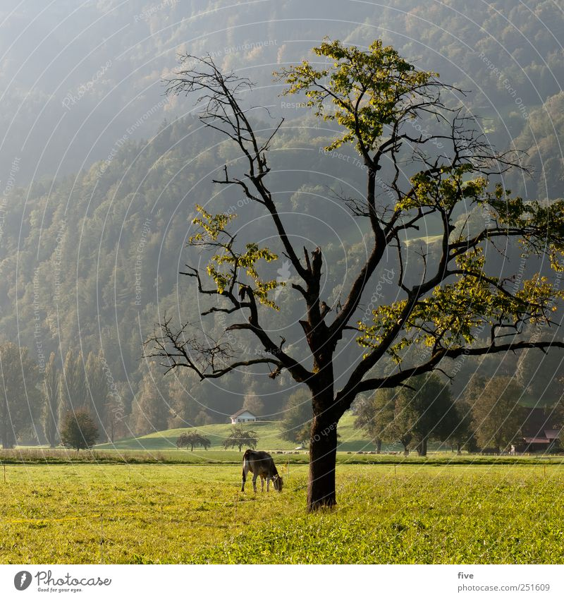 zerbrechlich Natur alt Baum Pflanze Blatt Wiese Herbst Umwelt Landschaft Gefühle Gras Stimmung Feld groß Hügel Ast