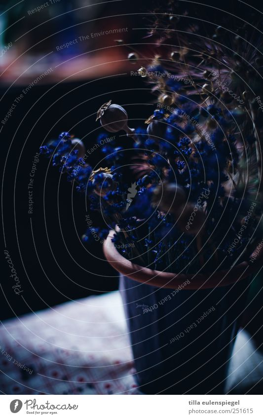 ° Pflanze dunkel wild natürlich Mohn Blumenstrauß Vase Lavendel dehydrieren Trockenblume Mohnkapsel