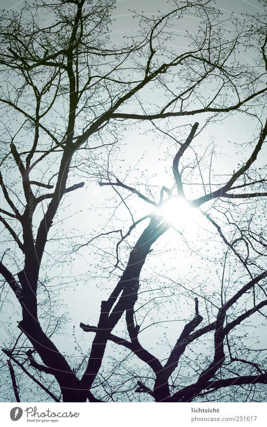 verzweigt Umwelt Natur Urelemente Himmel Wolkenloser Himmel Sonne Sonnenlicht Herbst Schönes Wetter Baum blau netzartig Ast laublos kahl Baumstamm Gegenlicht