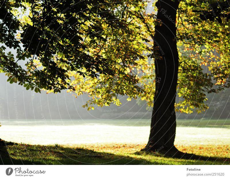 Schloßpark Umwelt Natur Landschaft Pflanze Herbst Schönes Wetter Nebel Baum Gras Garten Park Wiese hell natürlich Kastanienbaum Farbfoto mehrfarbig