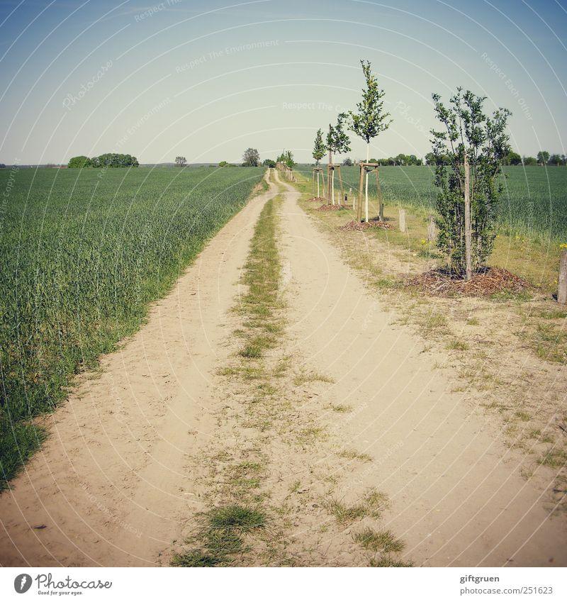 perspectives Himmel Natur Baum Pflanze Straße Wiese Umwelt Landschaft Sand Wege & Pfade Linie Feld Erde Wachstum Perspektive Urelemente