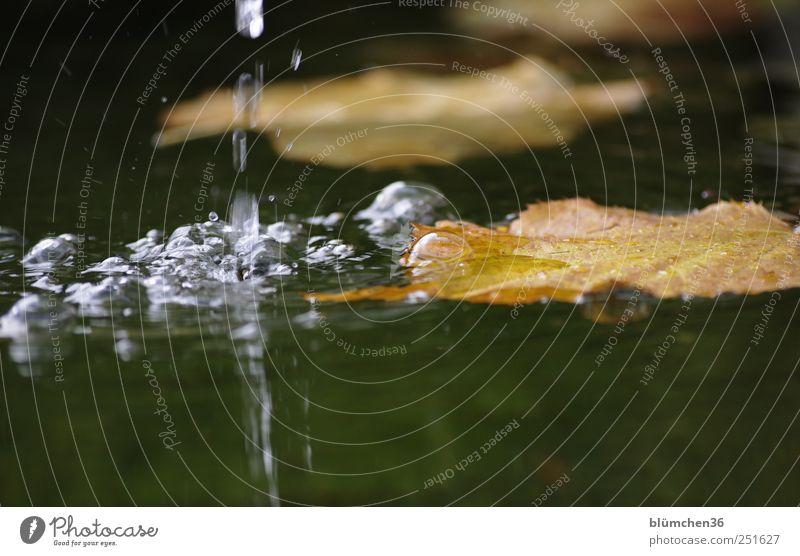 Blatt mit Blubb Natur Wasser Herbst Stimmung nass Wassertropfen natürlich rund außergewöhnlich Tropfen Brunnen Luftblase fließen spritzen Herbstlaub