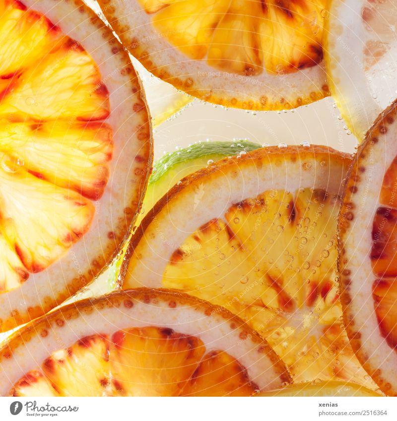 Eine Limette unter Orangen Lebensmittel Frucht Zitrone Limone Bioprodukte Vegetarische Ernährung Erfrischungsgetränk Trinkwasser rund saftig sauer gelb grün