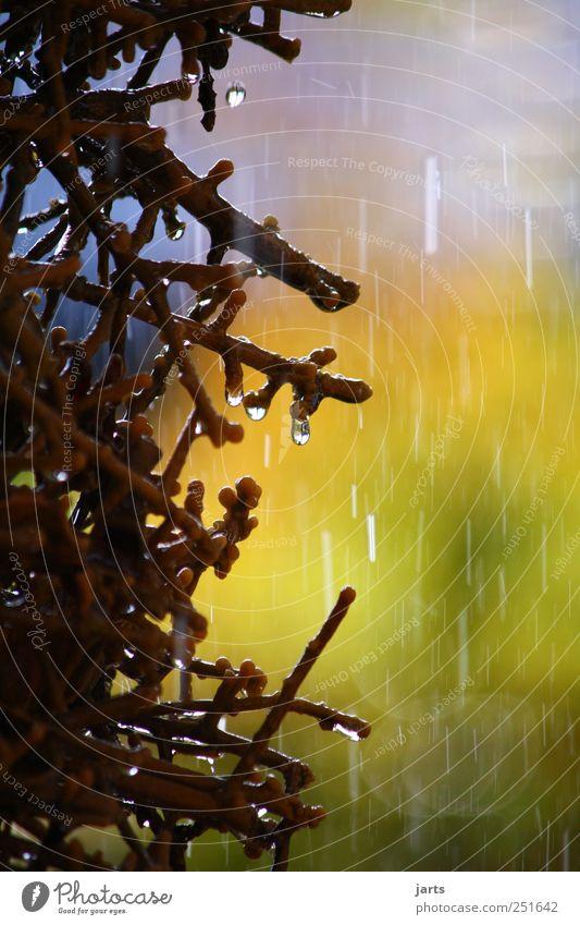 kurzer Regen zwischen den Schauern Natur Wasser Herbst Umwelt Wetter nass frisch natürlich Klima Urelemente Schönes Wetter schlechtes Wetter Saline