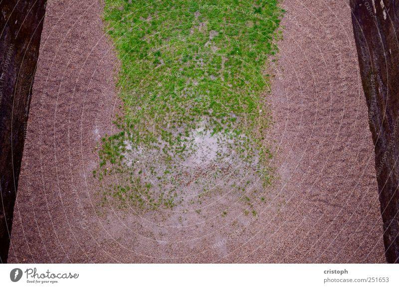 Parkanlage grün Wiese Wand Gras Sand Mauer trist