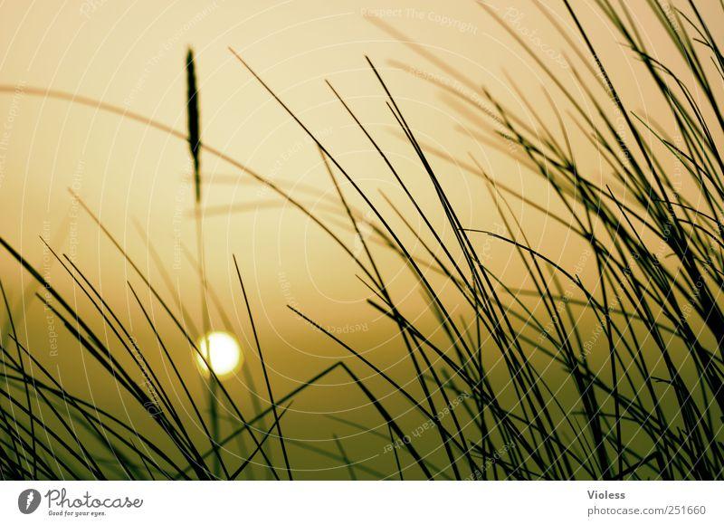 Spiekeroog   ...sunset Natur Pflanze Erholung Orange Romantik Nordsee genießen Spiekeroog Sonnenaufgang Meer Dünengras