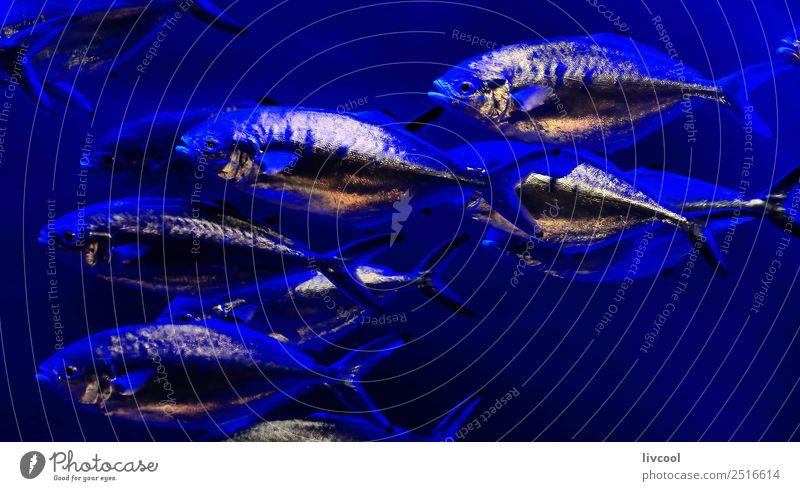 Silberfisch-Aquarium-Frankreich Lifestyle Zoo Natur Tier Sand Küste Kleinstadt Stadt Hauptstadt Architektur Fisch Tiergruppe Schwimmen & Baden blau Europa